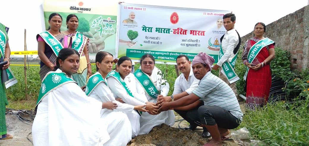 Brahma Kumaris Hazaribagh has started tree plantation Campaign with Dainik Bhaskar